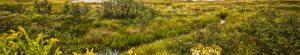 Gran Fondo Guysborough - Marsh Area